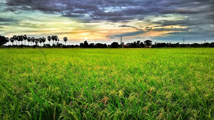Travel Cultures Nature Beauty In Nature Farmer View Thailand🇹🇭