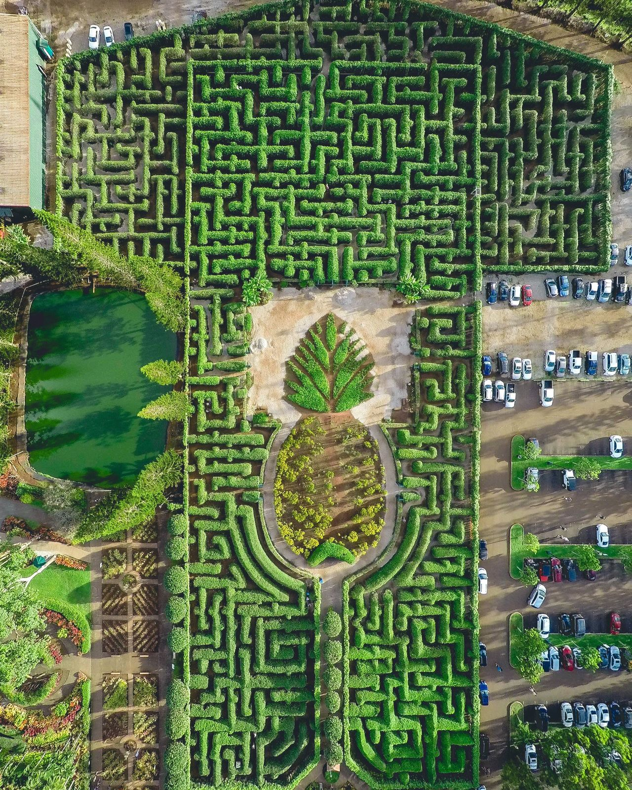 Sometimes life IS a game. Enjoy it. gGreen ColorbBrick WallnNo PeoplegGrowthaArchitectureoOutdoorsdDayHHawaiinNo Pepole33drsolodDronephotographyDDrone bBeauty In NatureTTreesMMazepPinappleAAerial ShotaAerial Photography