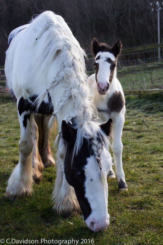 Melody's first day. Baby Beautiful Black And White Cute Foal Horse Maddy  Melody Newborn One Day Old