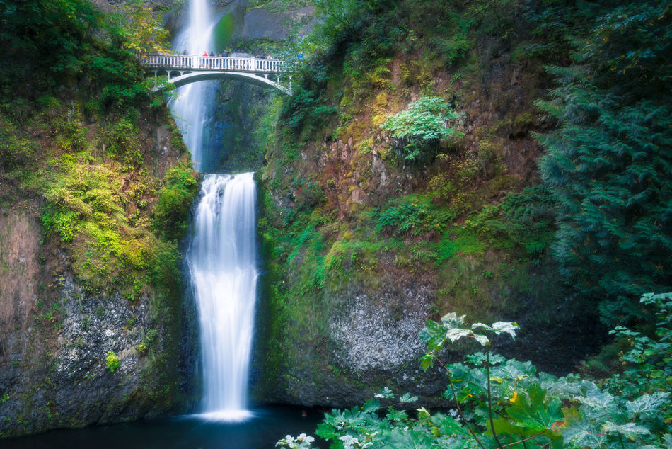 Multnomah Falls, this is where the amazing happens. Amazing View Awesome Beauty In Nature Bridge Capture The Moment Day Enjoying Life Forest Landscape Multnomah Falls  Nature No People Oregon Outdoors Pacific Northwest  Portland Rainforest Scenics Stunning Travel Travel Destinations Water Waterfall Waterfalls