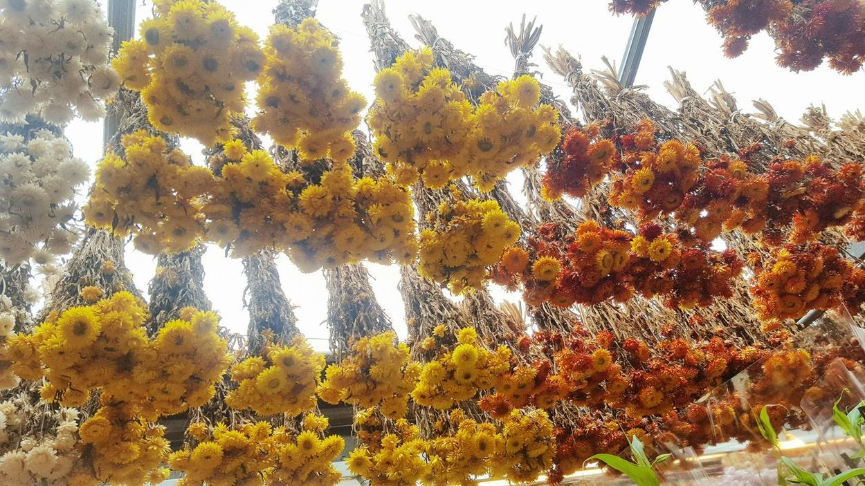 Nature Growth Low Angle View Outdoors Day No People Beauty In Nature Plant Tree Sky Flower Close-up Freshness Fleurs Fiori Nature_collection Colorful Nature Colorfull Flower Collection Garden Pianta Bloemenmarkt Dryflowers Fiorisecchi Amsterdamcity