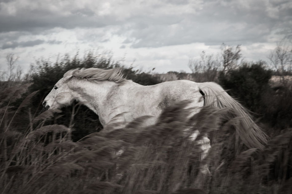 Beautiful stock photos of horse, Animal Themes, Cloudy, Day, Domestic Animals