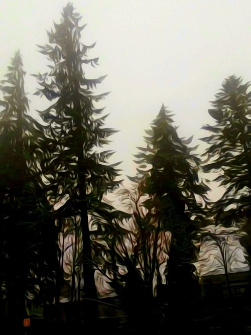 Nature Winter Cold Temperature Beauty In Nature Christmas Tree Outdoors Silhouette Tranquility For The Love Of Art Artistic Perception Waiting Game Focus On Foreground Cellphone Photography The Way Forward Original Photography Oregon Explored My Year My View Scenics Beauty In Nature Forest Photography Nature Tree Fragility Oregon Girl Low Angle View
