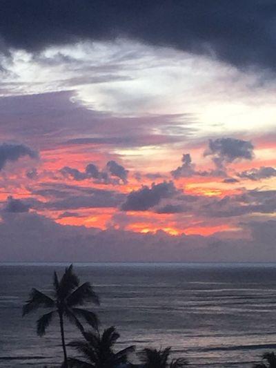 Waikiki Sunset Palm Trees 🌴 Tropics Oahu / Hawaii Oahu, Hawaii Oahu Sunset Island Of Oahu, Hawaii Waikiki Beach Waikiki Pacific Ocean Sky Pacific Sunset Pacific Ocean View Silhouette No People Cloud - Sky No Edit/no Filter An Eye For Travel