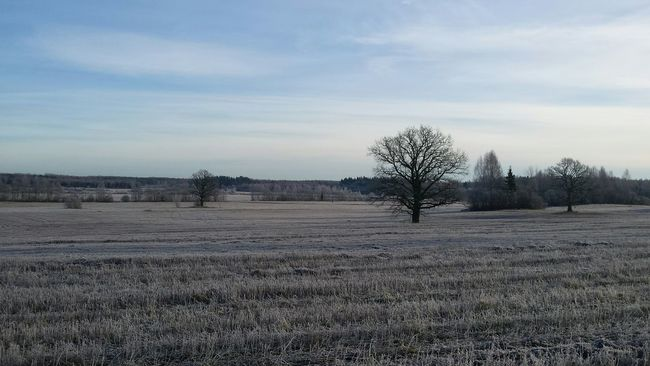 Cold Sky Apshalt Faraway Fatherland Family Ice Winter Firstsnow Tree Bigtree