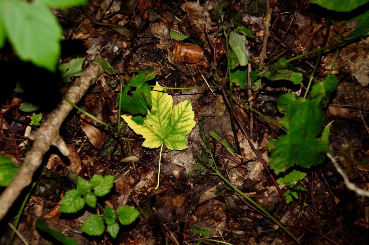 leaf, growth, nature, plant, no people, outdoors, day, close-up, fragility, beauty in nature, freshness