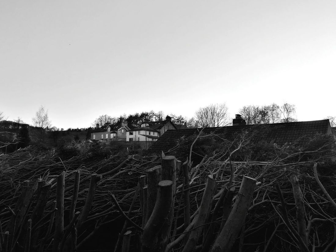 Houses Horizon Over Land Woods Bush Mystic Black & White Clear Sky Branches End Of The Day Scery Scery House Cumbria HuaweiP9 BYOPaper!