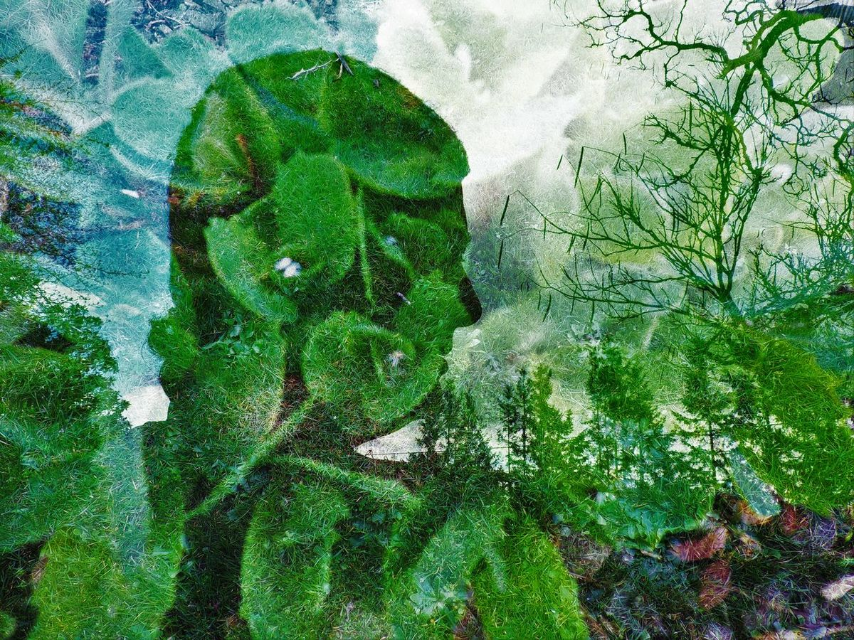 Beauty In Nature Day Double Exposure Freshness Green Green Color Growing Growth High Angle View Leaf Lush Foliage Nature No People Outdoors Plant Rock - Object Scenics Silhouette Tranquil Scene Tranquility Tree Tripleexposure Water