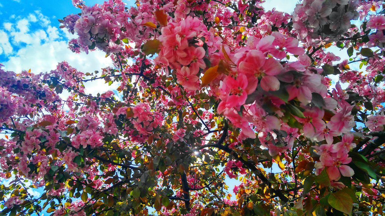 BigSkyCountry Montanamoment Beauty In Nature Tree And Sky Check This Out 😊 Growth Flower Tree Nature Outdoors Low Angle View Day Branch Beauty In Nature Fragility No People Plant SkyVibrant Color Pink Color Freshness Close-up