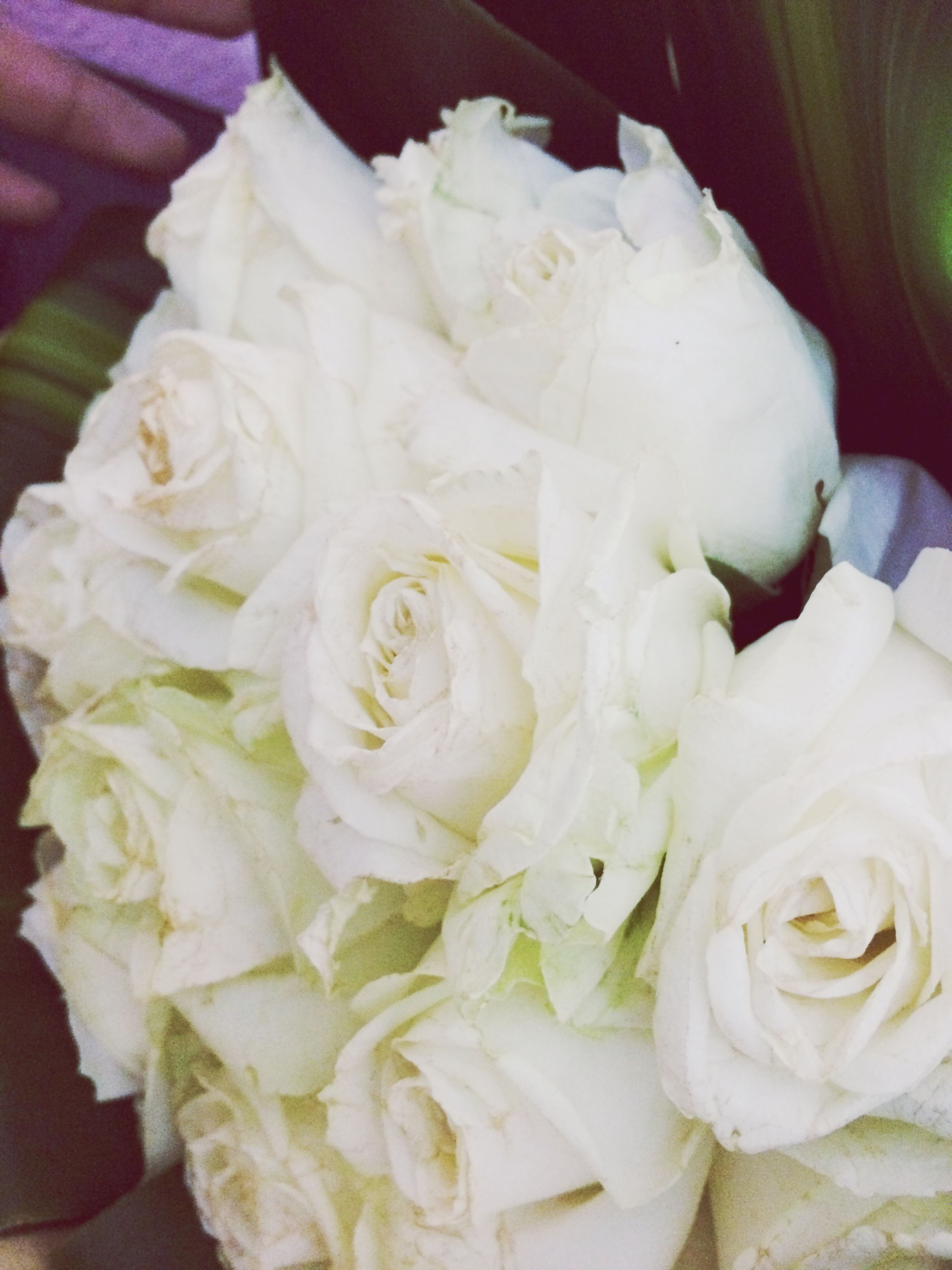 freshness, indoors, flower, petal, close-up, rose - flower, white color, fragility, flower head, high angle view, bouquet, food, no people, still life, food and drink, rose, beauty in nature, full frame, white, detail