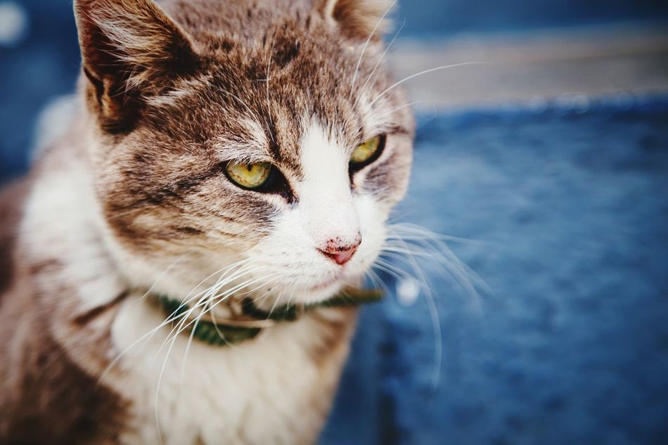 Beautiful stock photos of spain, Animal Themes, Close-Up, Domestic Animals, Domestic Cat