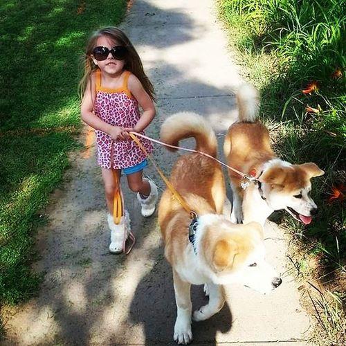 Diva Carmella Walkthedogs Beautiful MyGIRL Luvmydaughter Littlegirl Dogs Walk Sunnyday Mydiva Akitas Akitainu  JapaneseAkita Puppies Puppy Akitapuppies Bazzinga Bazinga