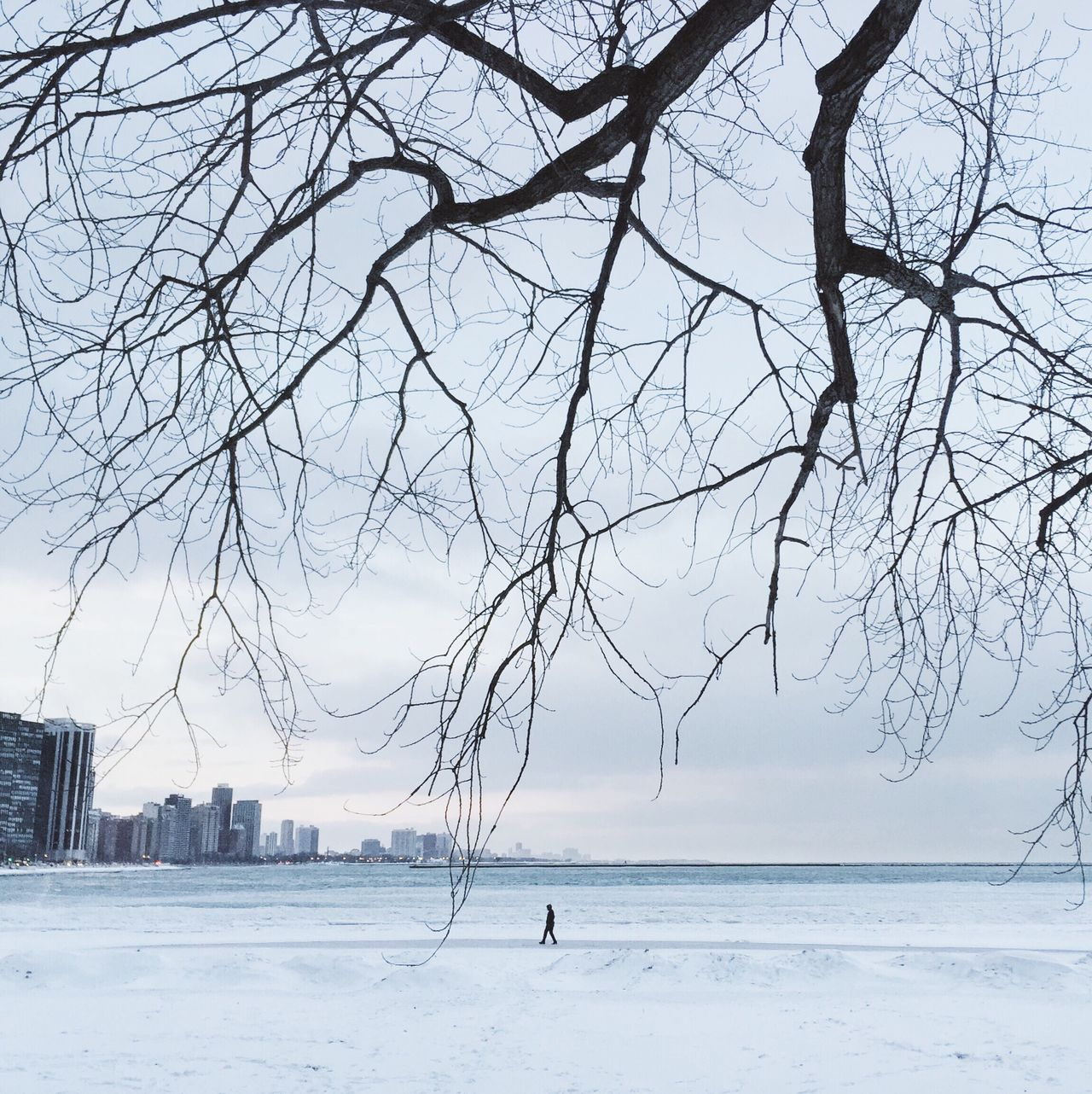 Signal/Cocu (WeChat:signalphoto)   Instagram: @cocu_liu Sea Water Scenics Bare Tree Nature Tree Beauty In Nature Winter Outdoors Sky Branch Beach Cold Temperature One Person Day Horizon Over Water People