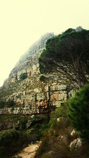 Devils peak! Hiking Taking Photos Road Trip Table Montian