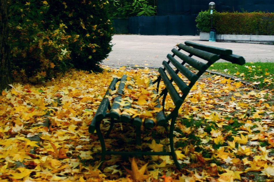Fogliegialle Yellowleaves Bench Panchina Autunno  Fall Autunno  Parco Park No People Nature Leaf Autumn Beauty In Nature Outdoors