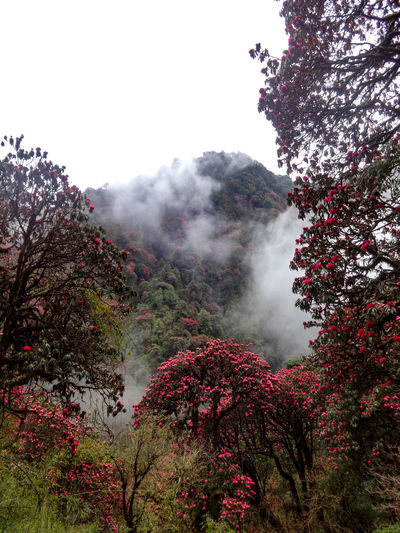 Fog Foggy Landscape Beauty In Nature Growth Pokhara, Nepal Travel Scenic Landscapes Landscapes Winter Sky Nature Rhododendrons Cold Temperature Fragility Colorful Tree Nature Landscape_Collection