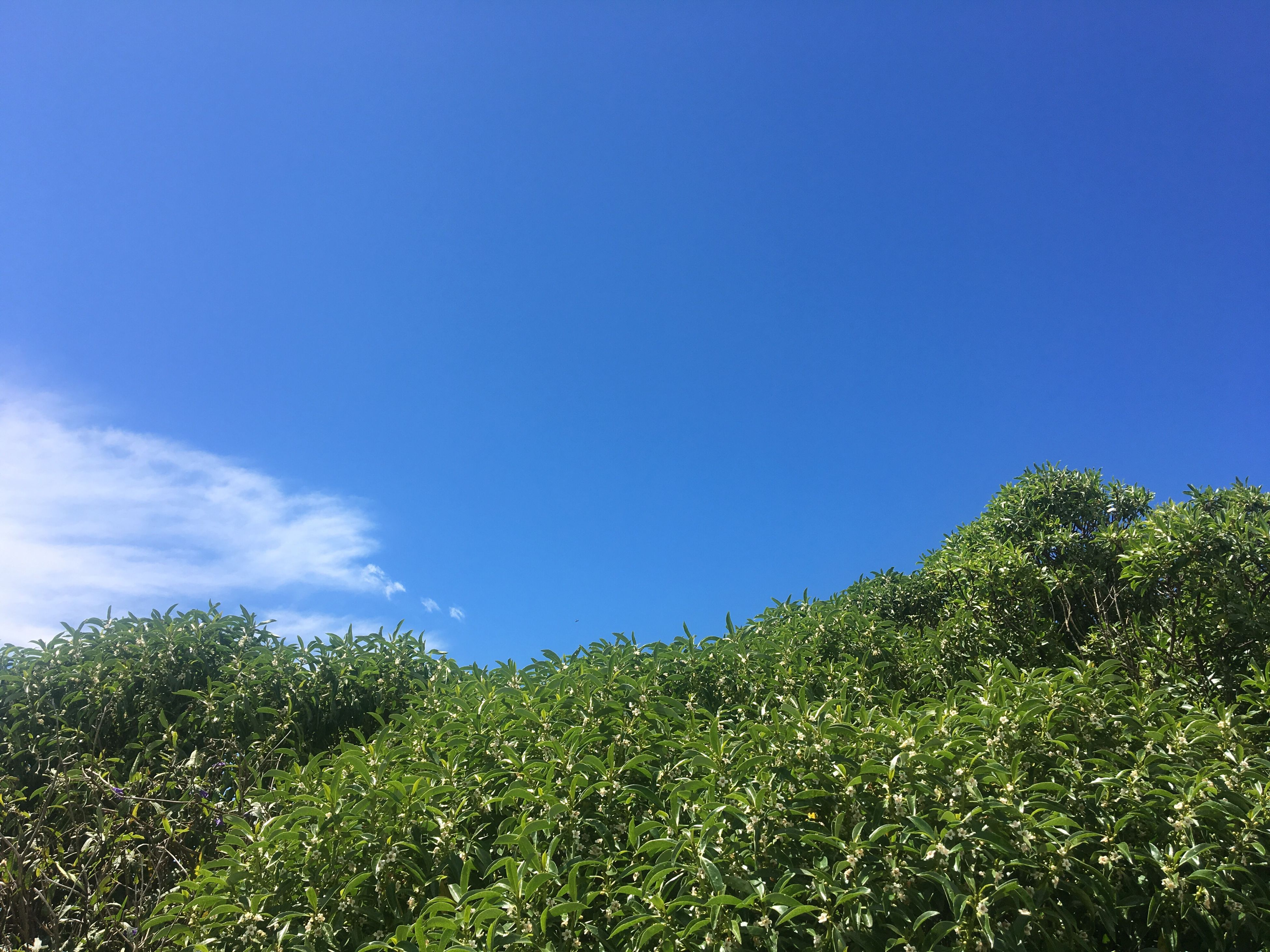 blue, growth, nature, green color, low angle view, sky, tree, clear sky, tranquility, beauty in nature, leaf, plant, day, no people, outdoors, scenics, tranquil scene, freshness