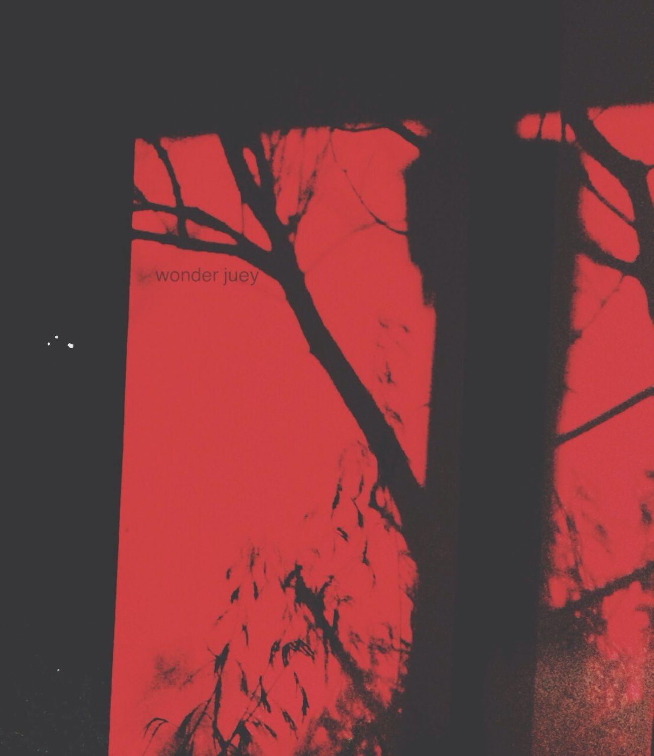 แสงสี ทำให้พี่เกิดภาพหลอน. ยังผวาห้องน้ำไม่หาย. Tree Red