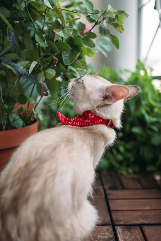 Animal Themes Cat Close-up Day Domestic Animals Growth Leaf Mammal Nature No People One Animal Outdoors Pets Plant