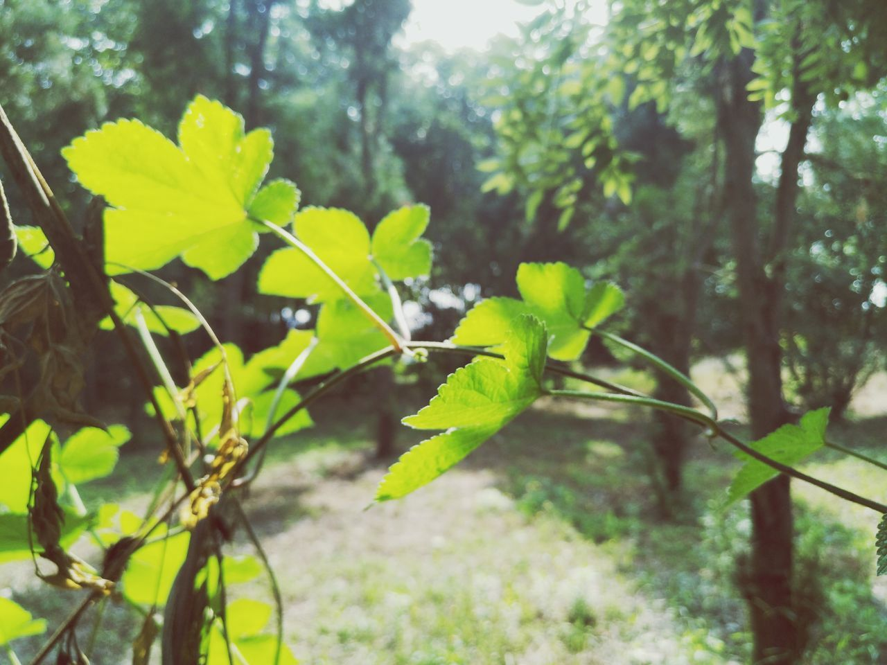growth, plant, nature, leaf, green color, no people, day, outdoors, beauty in nature, tree, close-up, fragility, freshness