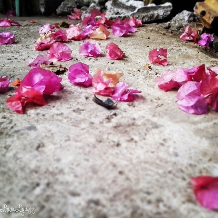 the fallen.. Flowers Eyeem Philippines