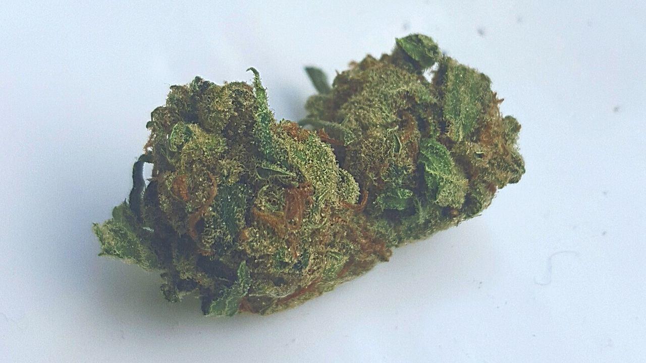 Marijuana Trichomes Bud WhiteRhino