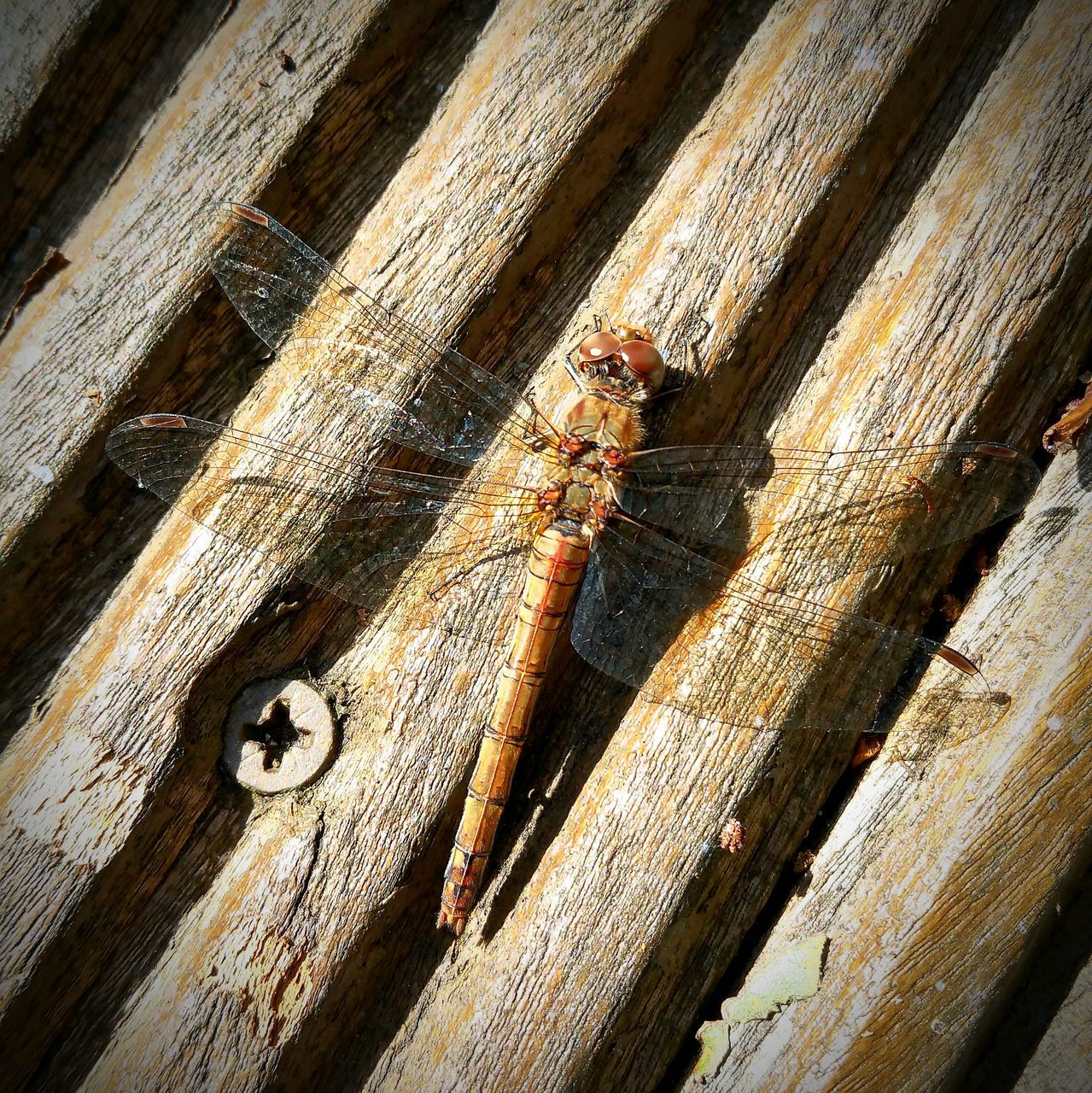 High Angle View Of Insect On Wooden Table