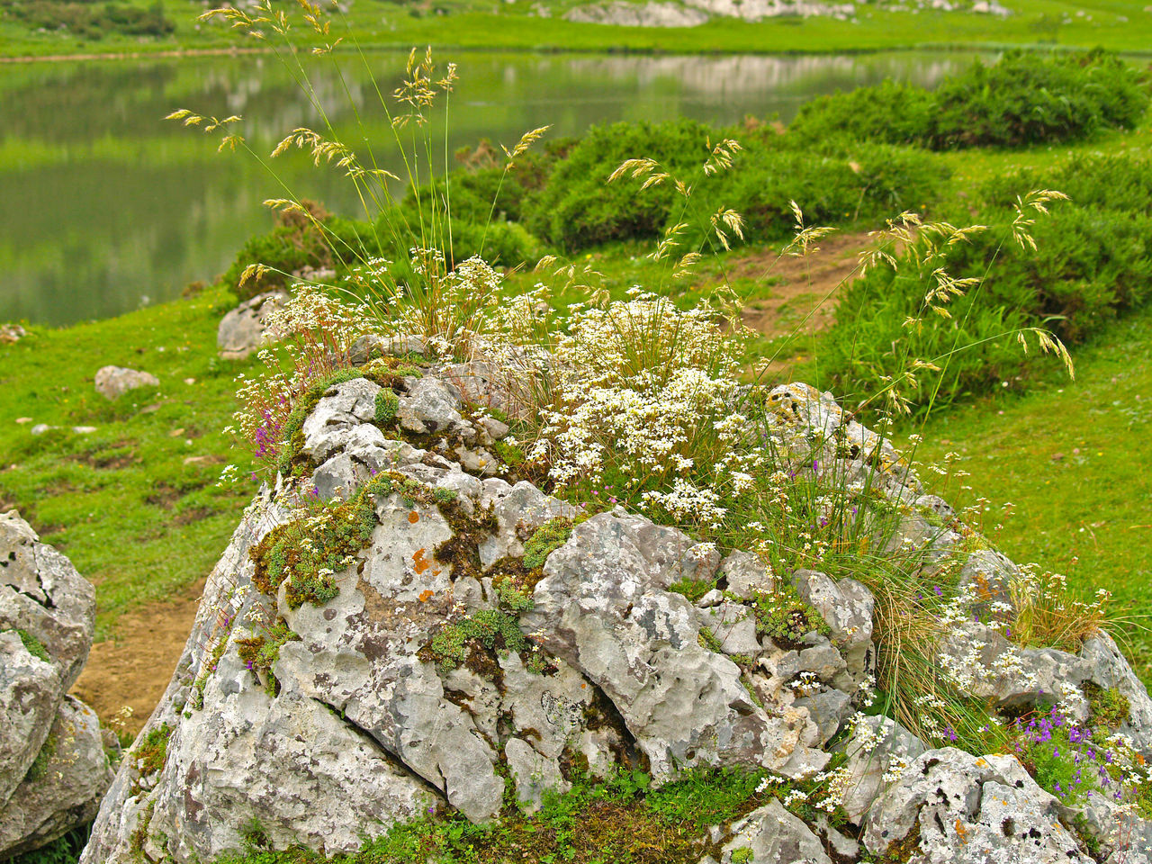 Backgrounds Day Environment Freshness Grass Grass Green Green Color Mountain Nature Nature No People Outdoors Pasture Pasture, Paddock, Grassland, Pastureland Picos De Europa Rock Rocky Spring Springtime Water