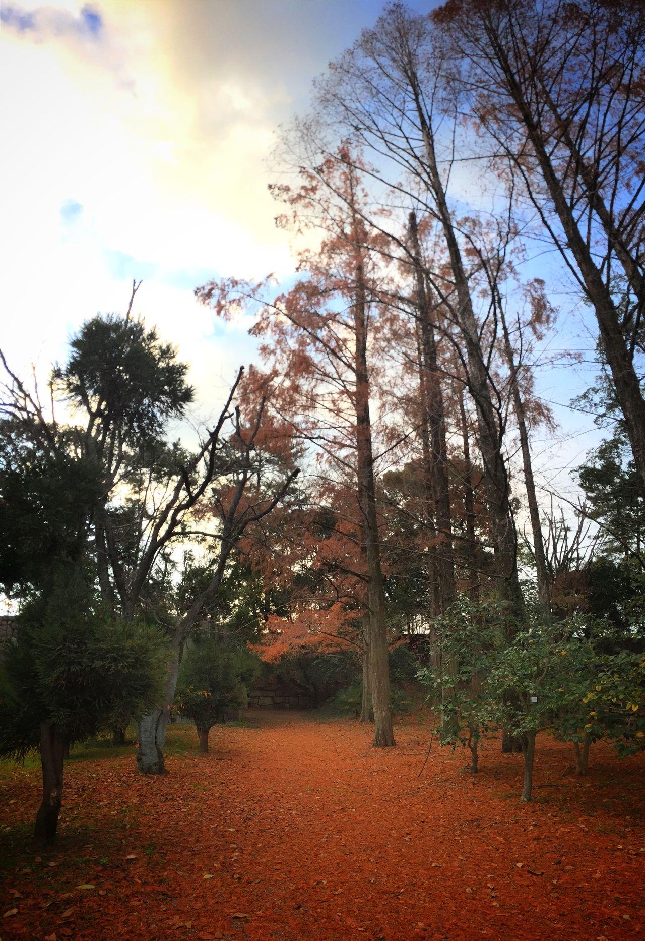 The hidden west gate of Hijo-jo Castle in Kyoto Traveling Autumn Colors Kx2014