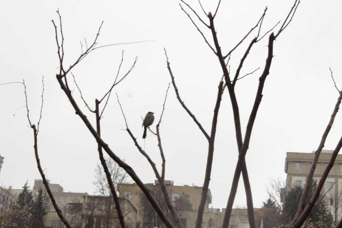 Animal Themes Architecture Bare Tree Bird Branch Building Exterior Built Structure Day Nature No People Outdoors Perching Tree