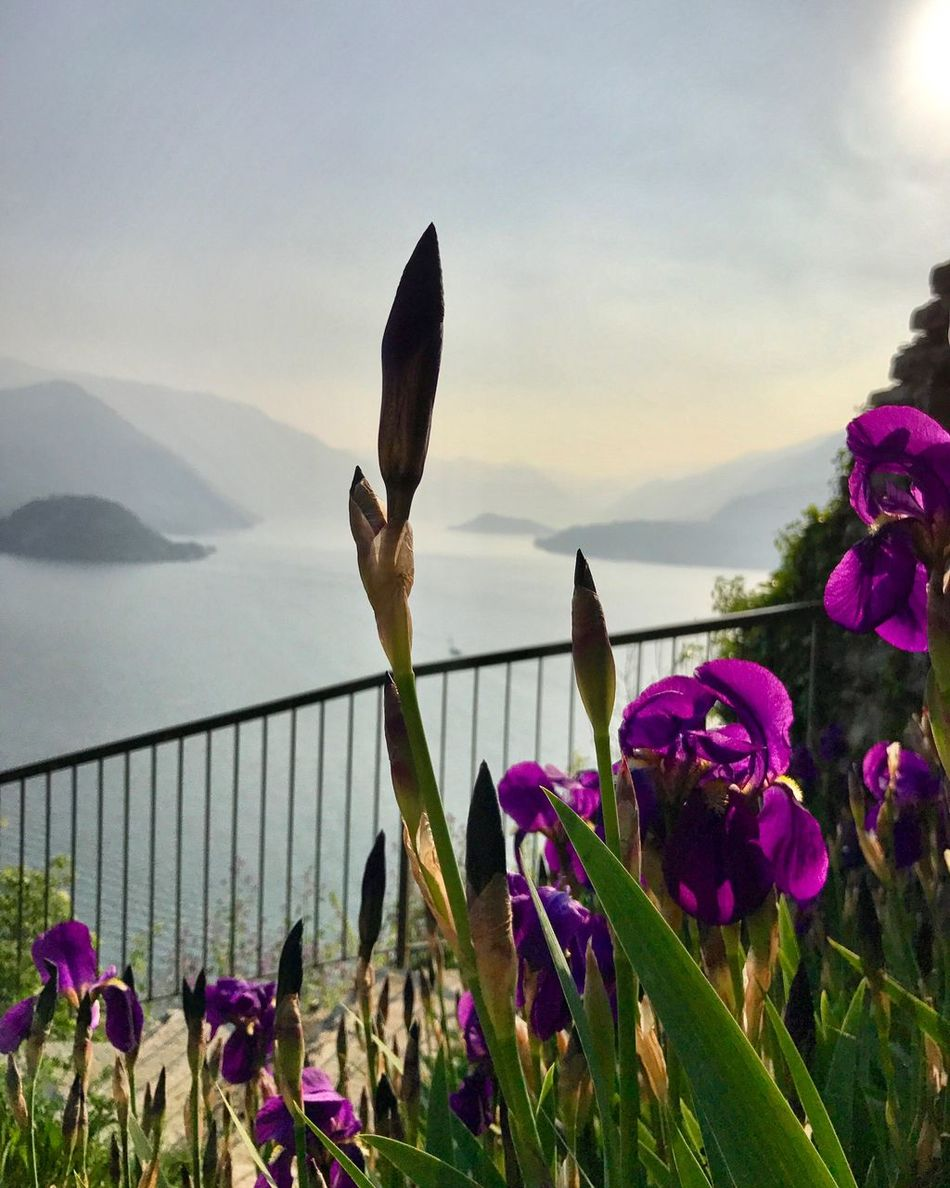 Varenna Lakecomo Italy Nature Nature Photography Flower Como Lake Outdoors Water
