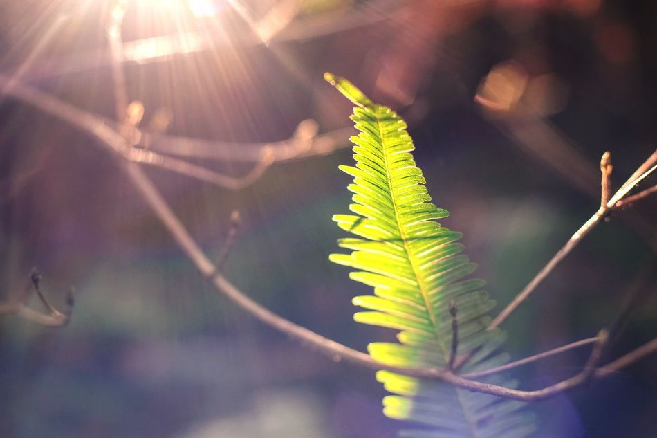 Leaf Nature Close-up Focus On Foreground Plant Growth Sunlight No People Fragility Day Freshness Outdoors Beauty In Nature Beauty In Nature Fujifilm_xseries Fujifilmxe1 Fujifilm XE1 Carl Zeiss Planar T* 1.4/50mm Planar50/1.4