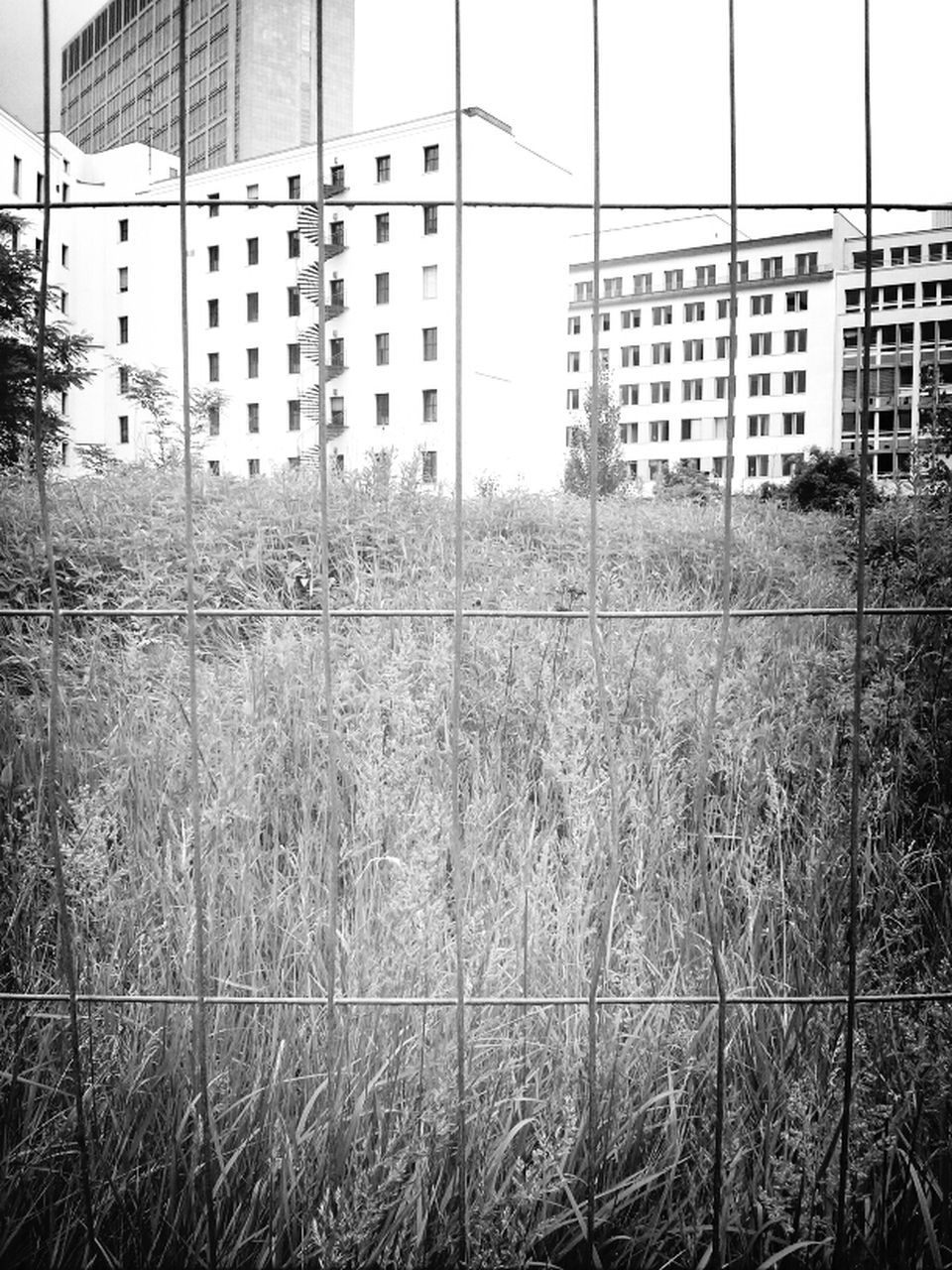 architecture, building exterior, built structure, grass, day, outdoors, city, no people, growth, nature, tree, sky