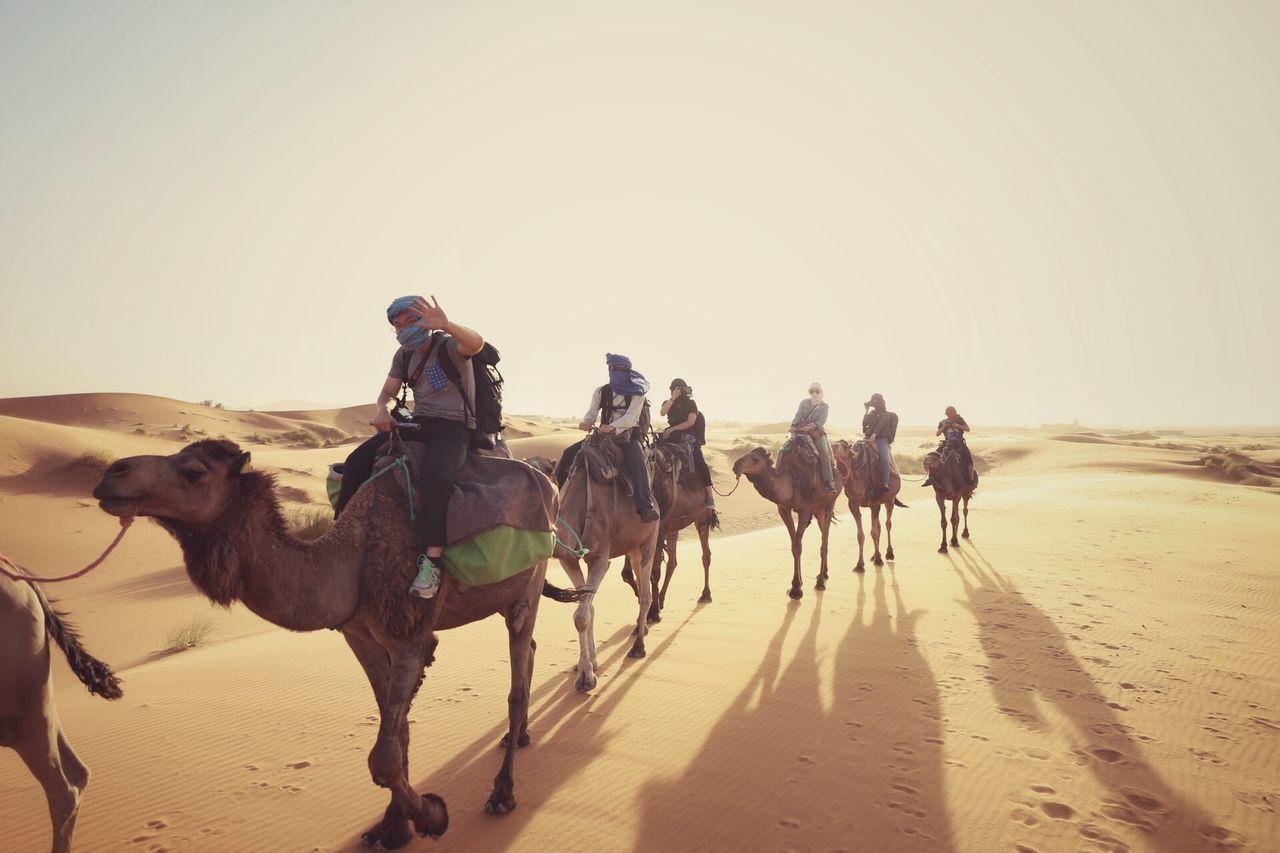 Desert Camel Travel Traveling Travel Photography Eye4photography  EyeEm Best Shots
