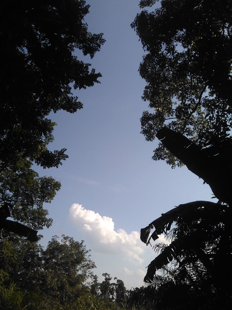 tree, low angle view, sky, growth, nature, beauty in nature, no people, branch, silhouette, cloud - sky, outdoors, day, tranquility, forest, scenics