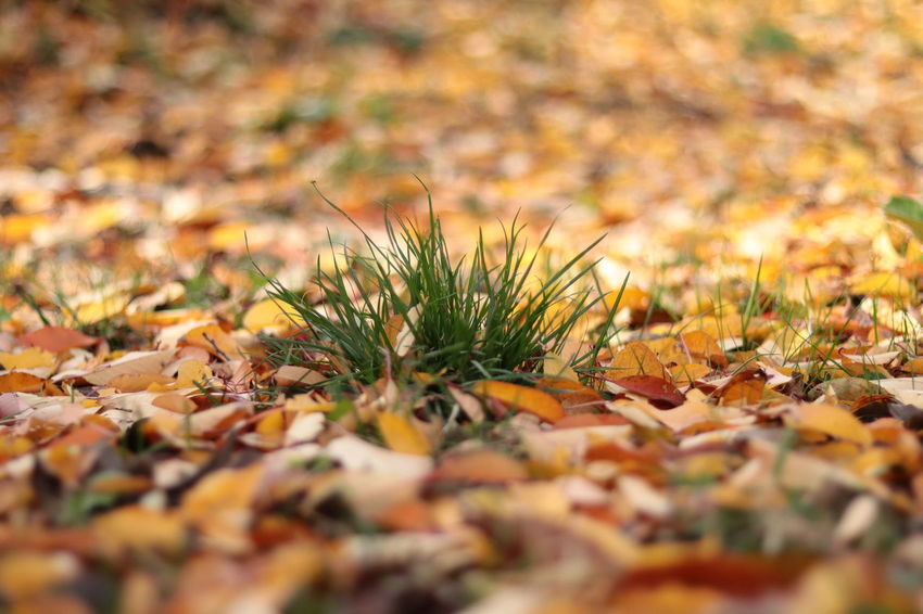 Autumn Nature Outdoors No People Day Leaf Moss Beauty In Nature Arid Climate Landscape Close-up The Week On EyeEm