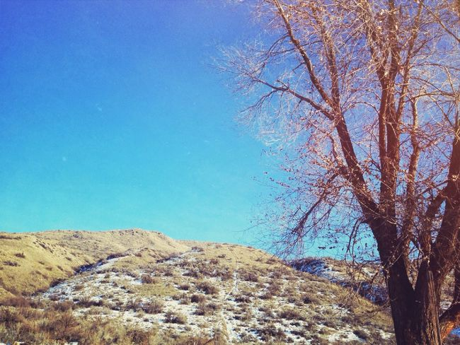 Where is all the snow at!? December Let It Snow Landscape Bare Blue Skies