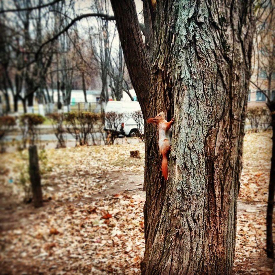Funny squirrel near the office😊 Funnysquirrel Redsquirrel Squirrel Flexiwoodoffice Flexiwood Kievautumn Kyivautumn