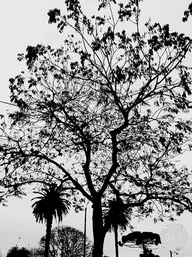 árbol Nature Friends Relaxing Nice Day Check This Out Blackandwhite EyeEm Best Shots