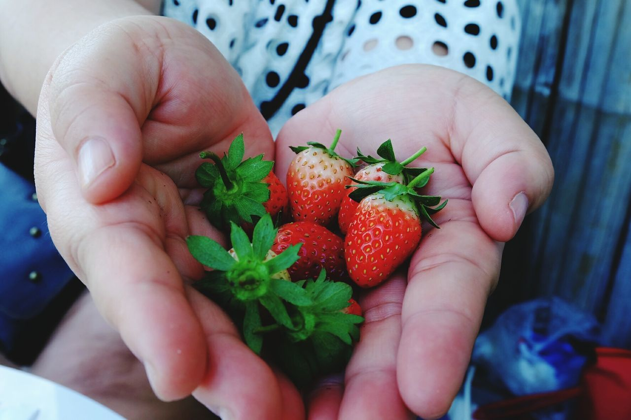 Sweet stawberry Sweet Strawberry Fruit Hand Holding Human Body Part Human Hand Healthy Eating Nature Close-up Freshness Outdoors Red Adult Healthy Lifestyle Healthy Sour Fujifilm Fujifilmxa2 Fujifilm_xseries Xa2