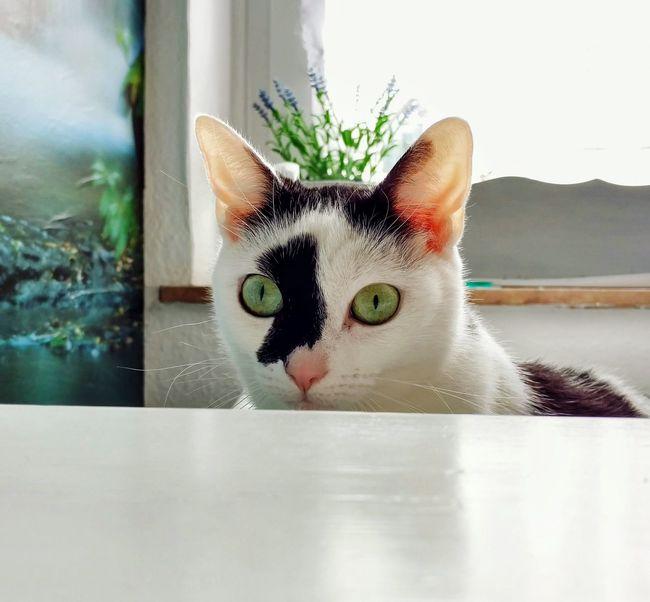 Staring at my Breakfast. Jummey. Good Morning Cats Eyem Animal Lovers Eyem Cat Eyem Best Shots Eyem Cats Animal Photography Enjoying Life