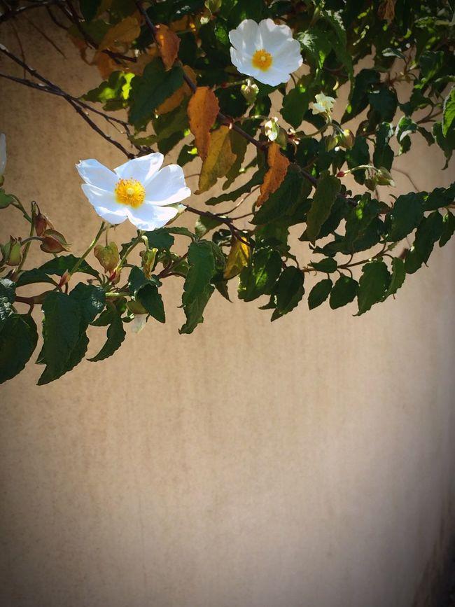 Urban Spring Fever Water Conversation Park. Flowers,Plants & Garden