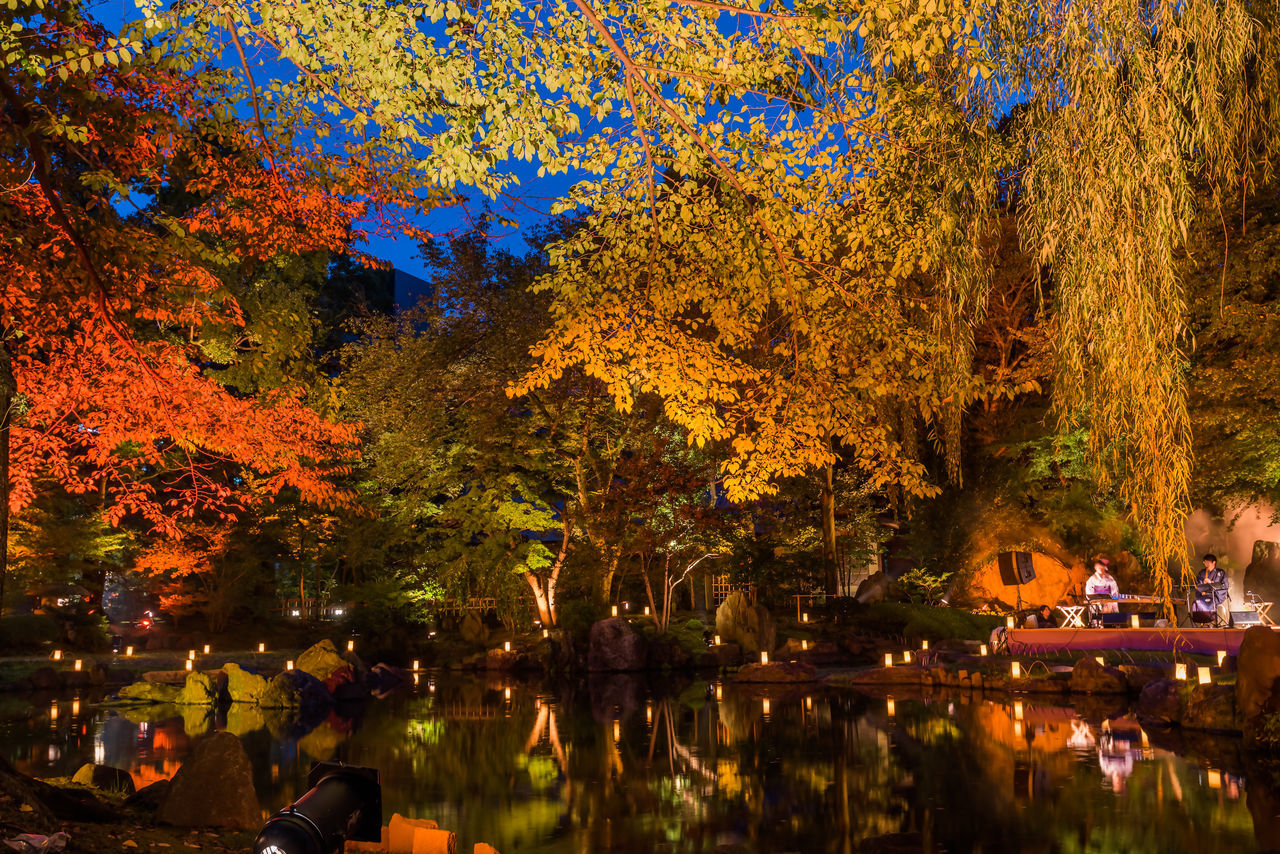 Autumn Autumnal Tints Beauty In Nature Colored Leaves Dead Leaves Growth Lake Landscapes Large Group Of People Leaf Men Nature Night Outdoors People Photography Real People Red Leaves Reflection Scenics Tree Water Water Surface Yasukuni Shrine