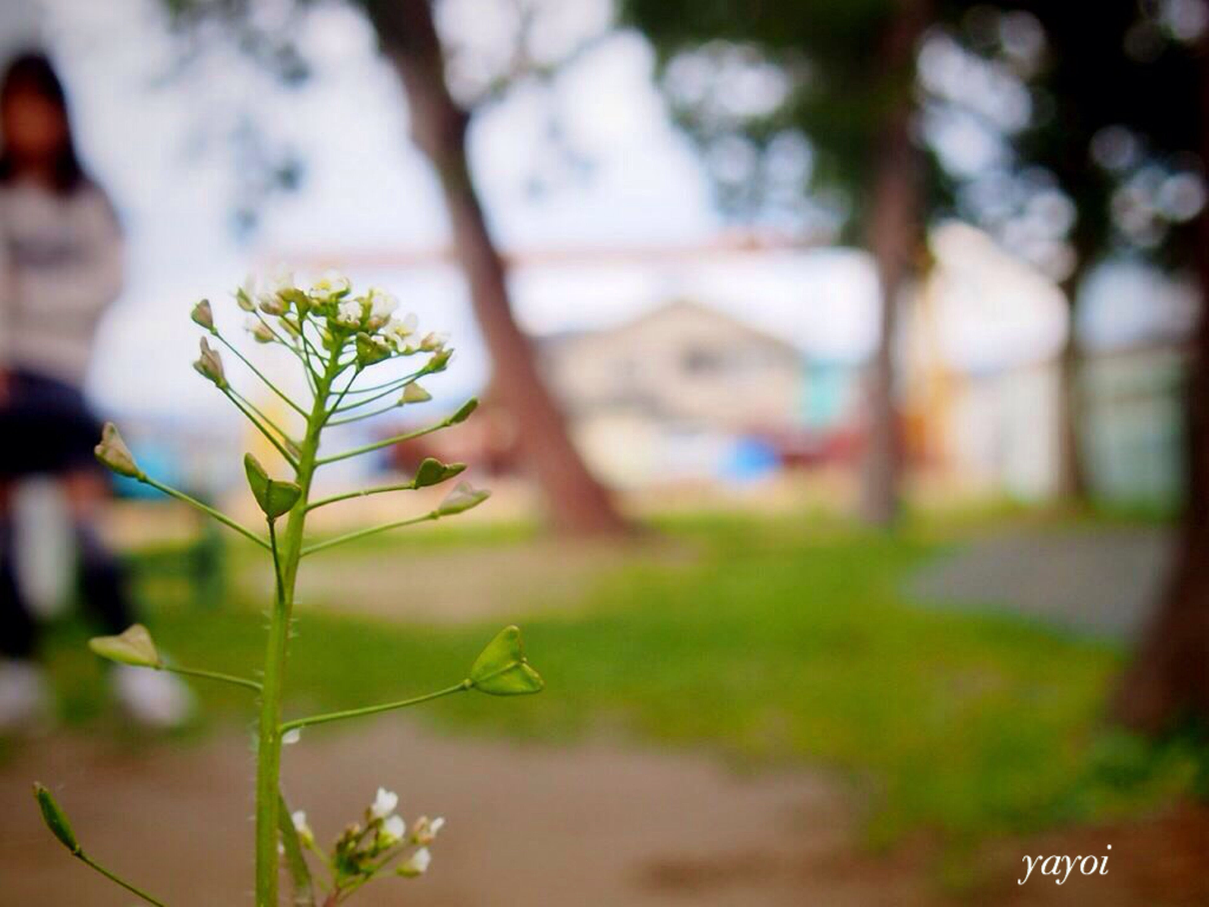 focus on foreground, plant, growth, selective focus, built structure, building exterior, architecture, close-up, leaf, tree, day, outdoors, nature, flower, branch, no people, house, sunlight, front or back yard, green color