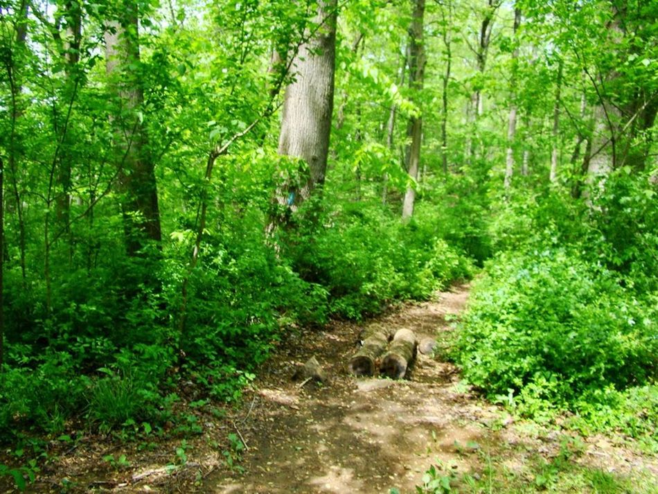 Animal Themes Animals In The Wild Beauty In Nature Day Domestic Animals Forest Green Color Growth Mammal Nature No People One Animal Outdoors Plant Scenics Tree Tree Trunk WoodLand