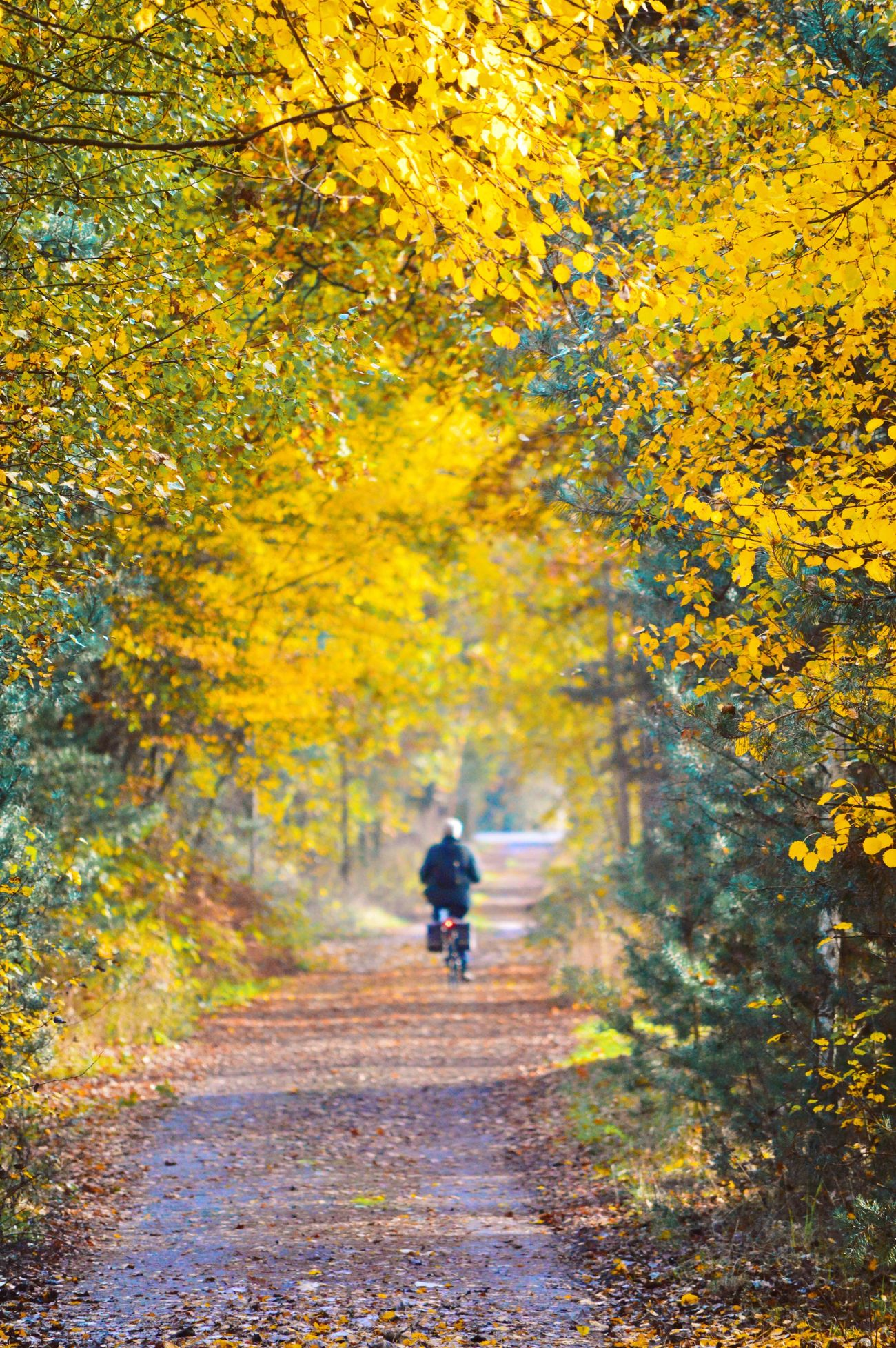 Autumn Autumn Colors Outdoors Rear View Bike Woman Driving Leaf Daydreaming EyeEm Gallery EyeEm Best Shots - Nature Check This Out EyeEm Nature Lover Viewwithmyeyes Luxxxs Beauty In Nature Nature_collection Taking Photos Hello World Walking Around Enjoying The Sun Naturelovers Nature Tranquil Scene Tree
