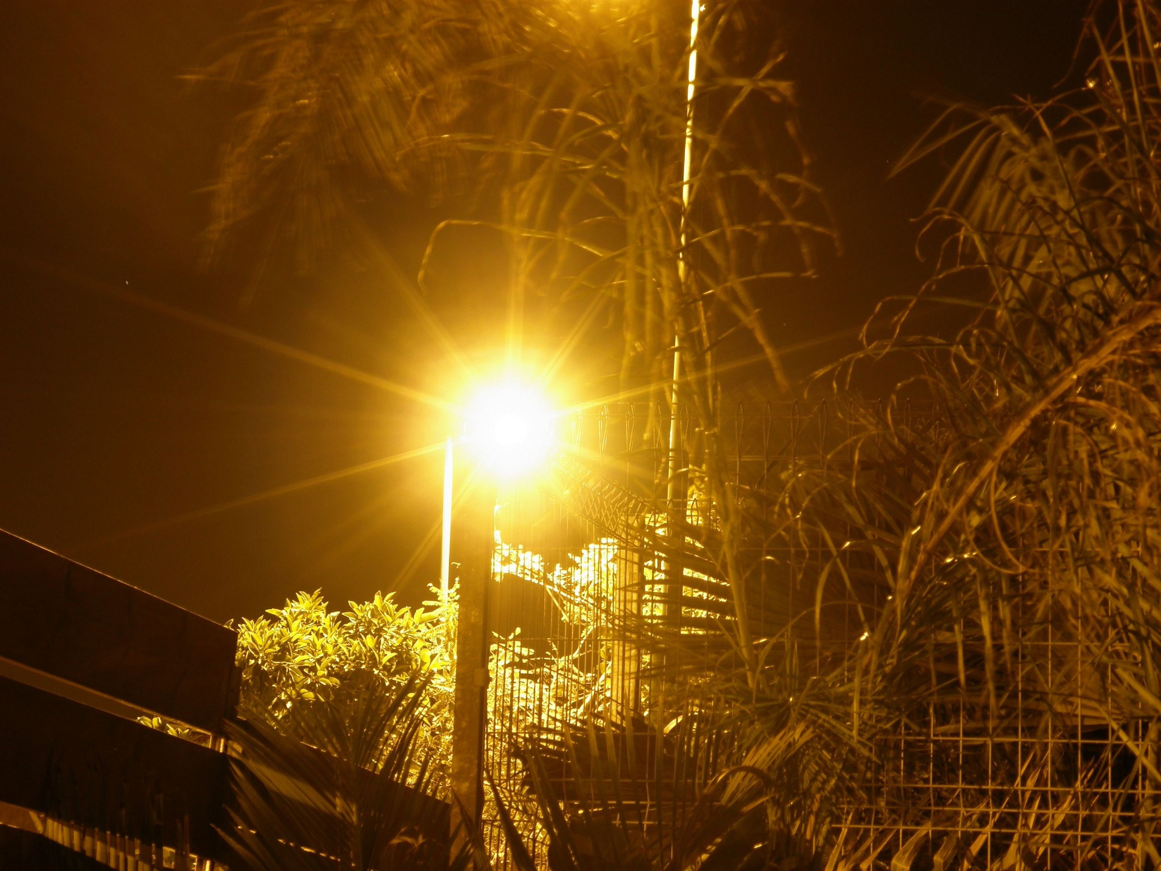 night, illuminated, tree, low angle view, sky, street light, outdoors, nature, no people, silhouette, lens flare, built structure, sunlight, lighting equipment, fence, glowing, bare tree, light - natural phenomenon, electricity, building exterior