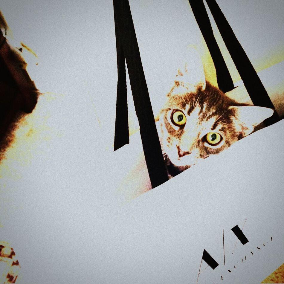Leo loves catton Armaniexchange Relaxing Armani❤ Catoftheday