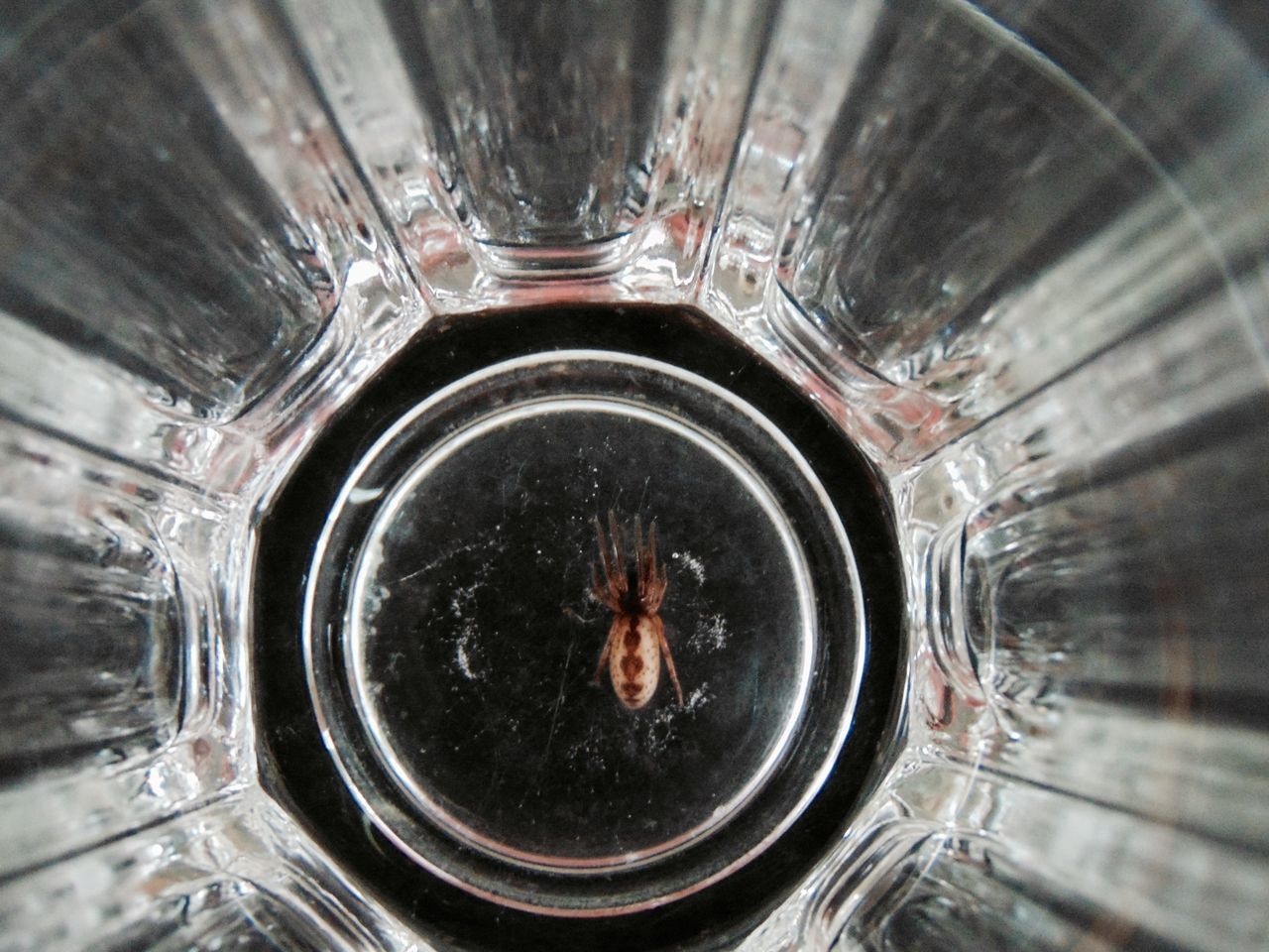 Bottom Of The Glass Close-up Container Day Dirty Focus On Foreground Glad I Checked Glass No People Spider Spiders Still Life
