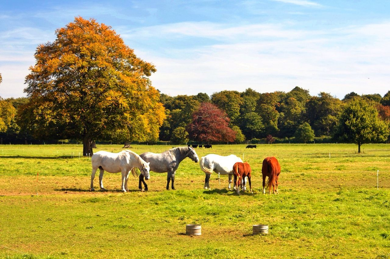 Beautiful stock photos of dublin, Animal Themes, Beauty In Nature, Cloud, Day